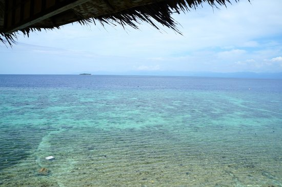 Quo Vadis Dive Resort: The view steps away from your room