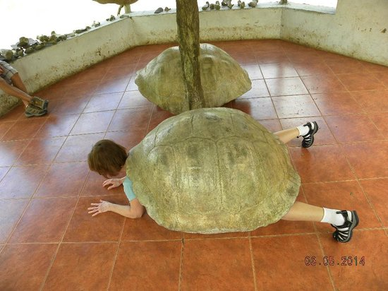 Galapagos Alternative - Day Tours: My wife as a turtle