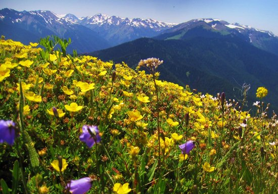 Lost Mountain Lodge: The tippy top of Blue Mountain. JUne-August flowers, 60 min from Lodge to top