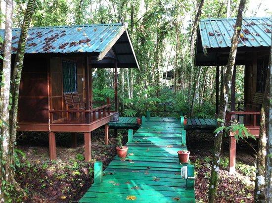Nature Lodge Kinabatangan: Boardwalk leading to the chalets