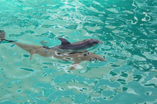 Interactive Aquarium : baby dolphins