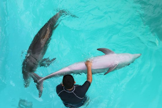 Interactive Aquarium : dolphins with the handlers
