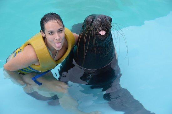Interactive Aquarium: sea lion experience