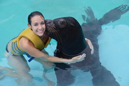 Interactive Aquarium : sea lion experience