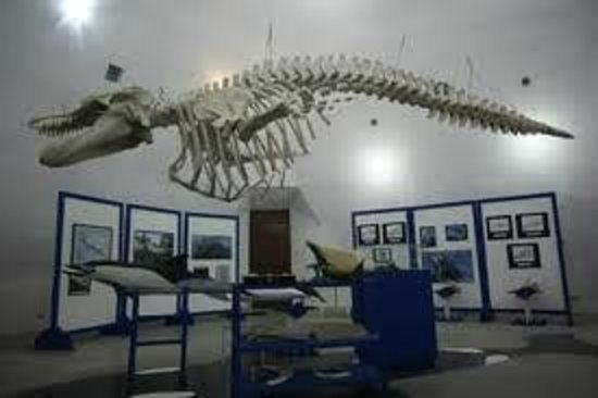 La Paz, México: Museum of the Whale