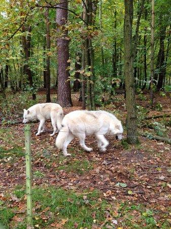Wildpark Alte Fasanerie Klein-Auheim: Weniger als 4 m entfernt