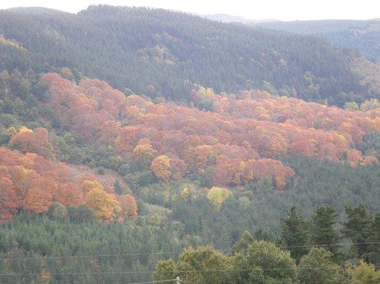 Mendi Alai: hermoso bosque próximo