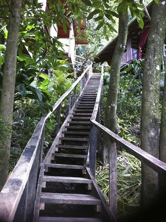 Lookout Inn Lodge : Stairs up to Butterfly and Monkey rooms