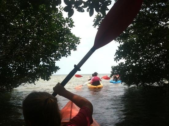 Danger Charters : kayaking in the Florida mangroves