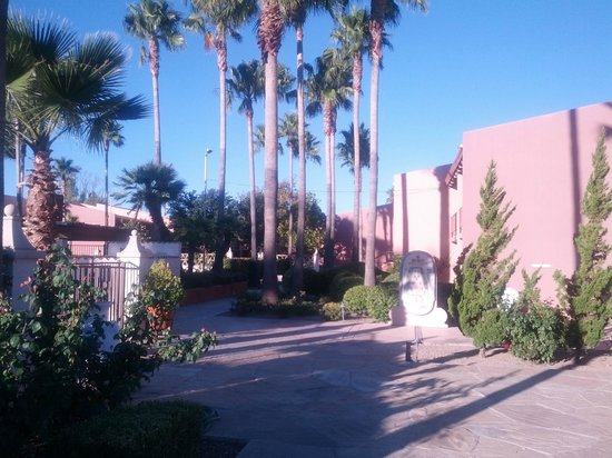 Esplendor Resort at Rio Rico: Love the palm trees