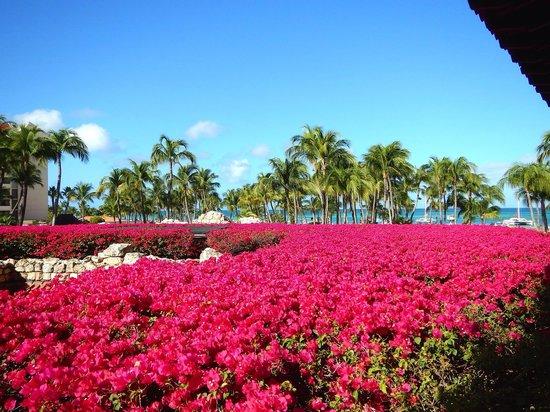 Hyatt Regency Aruba Resort and Casino: Impeccable grounds