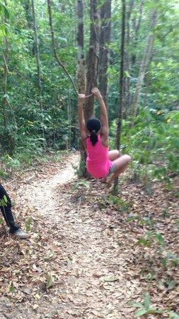Khlong Chak Waterfall: Vines on the jungle trail