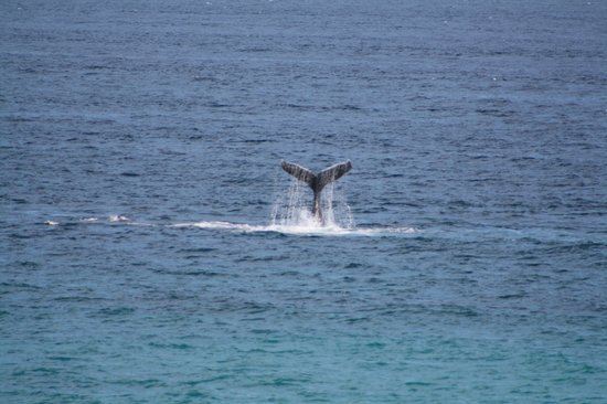 Paradisus Los Cabos: watching the whale tail from sitting at the snack bar