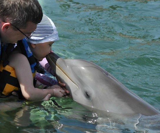 Dolphinaris Riviera Maya Park: 1