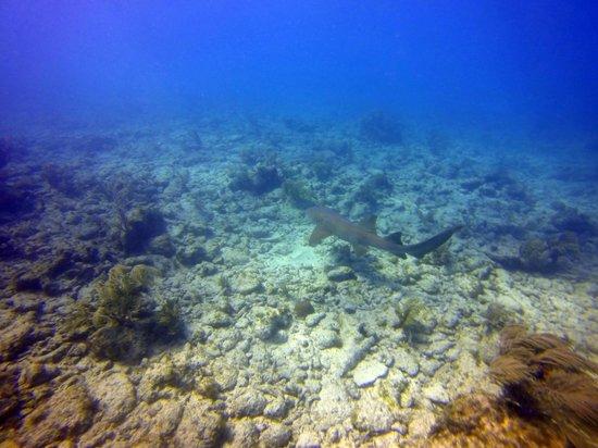Silent World Dive Center: Nurse shark on City of Washington
