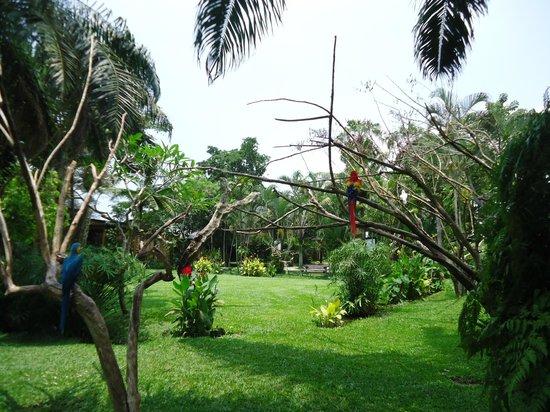 Bali Bird Park: beautiful green
