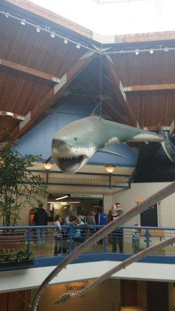 St. Louis Zoo: Main lobby