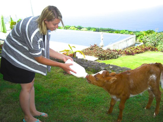 Horizon Guest House: Guest feeding one of the orphan calves