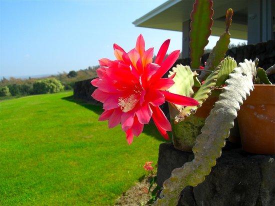 Horizon Guest House: Cereus