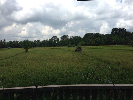 Tegal Sari: View from the room