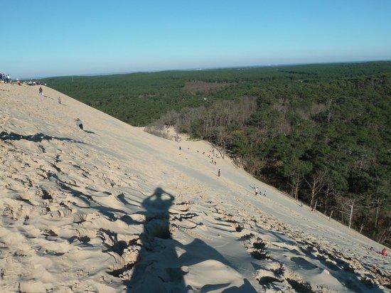 Dune du Pilat : côté forêt