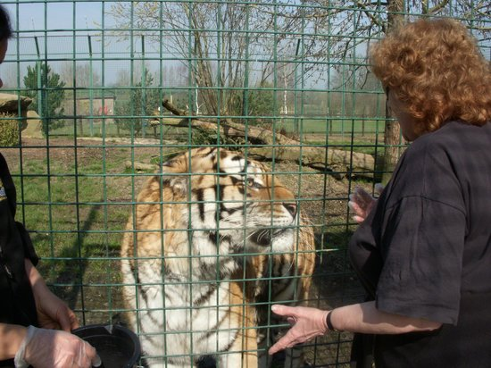 The Big Cat Sanctuary: Pan