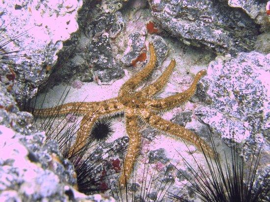 Centro de Buceo Aqua-Marina: Spiny Star Fish