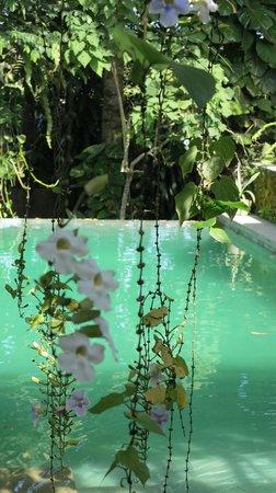 Villa Puri Darma Agung: Balinese paradise
