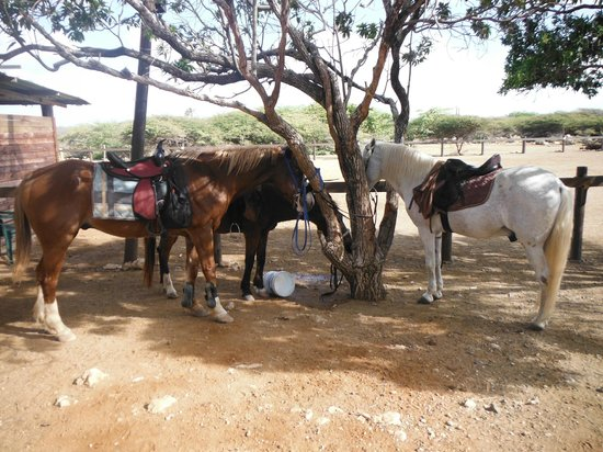 Horse Ranch Bonaire: Getting ready for the off