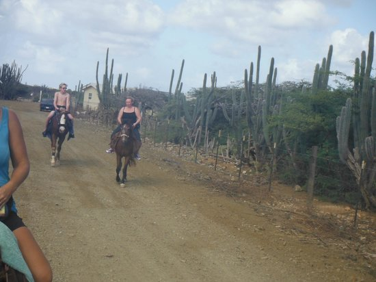 Horse Ranch Bonaire: On the hack