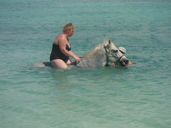 Horse Ranch Bonaire: Nicky swimming with the horses