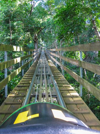 Rainforest Bobsled Jamaica at Mystic Mountain: Photo taken from the car at the end of the ride - wow!