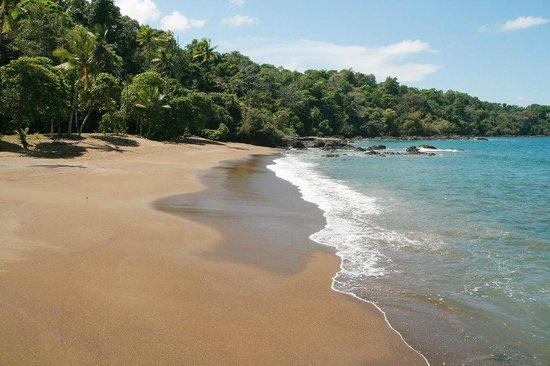 Cabinas Manolo : Badebucht bei Drake Bay