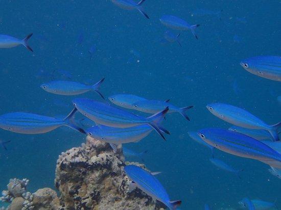 Veligandu Island Resort & Spa : Le paradis tout simplement