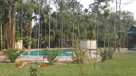 Infinity Resort Kaziranga: Pool view