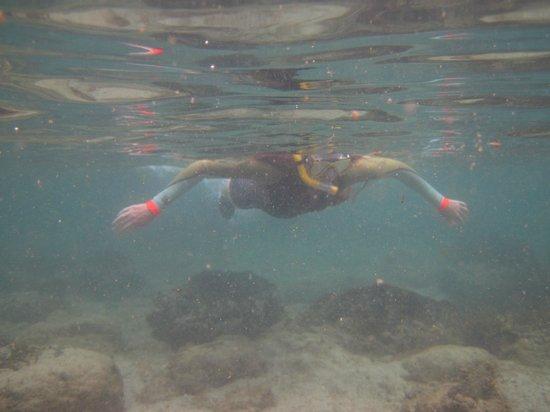 Bay of Islands Kayaking: Snorkelling in Motuarohia Island lagoon
