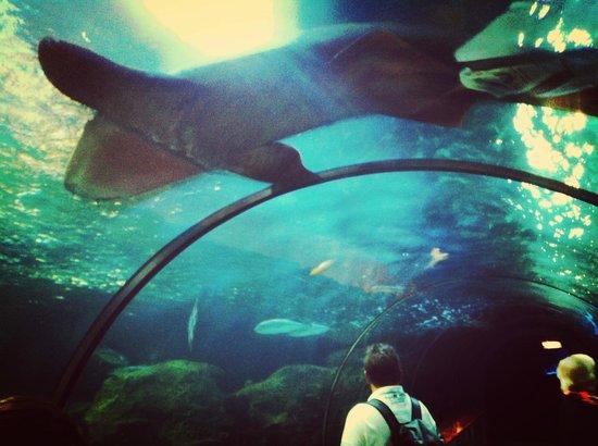 Loro Parque: sharks