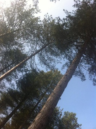 Formby Beach: Pinewoods
