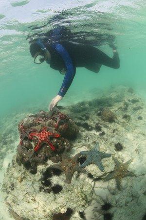 Ras Michamvi Beach Resort : star fish