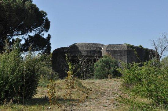 Riserva Naturale Ca' Roman: Pellestrina (Ve), l'Oasi di Ca' Roman