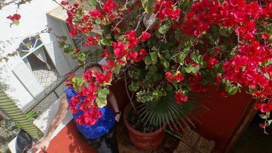 Maison de la Photographie de Marrakech : terrase