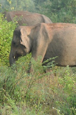 Athgira River Camping: Olifant tijdens de safari in Uda Walawe National Park