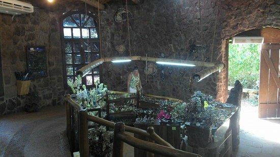 Hotel Saint George : Aripuca