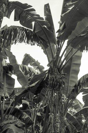 Orto Botanico di Palermo: Palms and tropical tree section