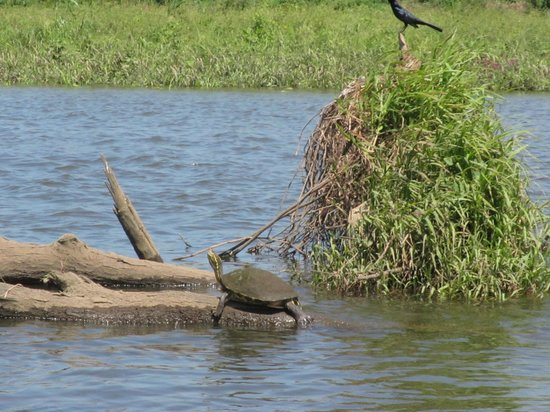 Crocodile Man Tour: birds and turtles