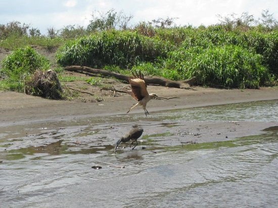 Crocodile Man Tours : spotting birds