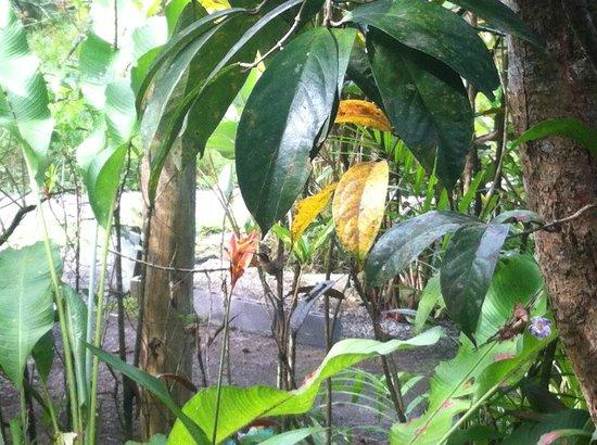 Observatorio natural: Kolibri