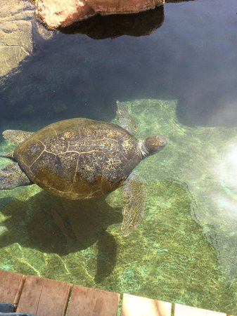 Underwater Observatory Marine Park: Sköldpadda