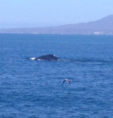 Hotel Riu Vallarta: Whales
