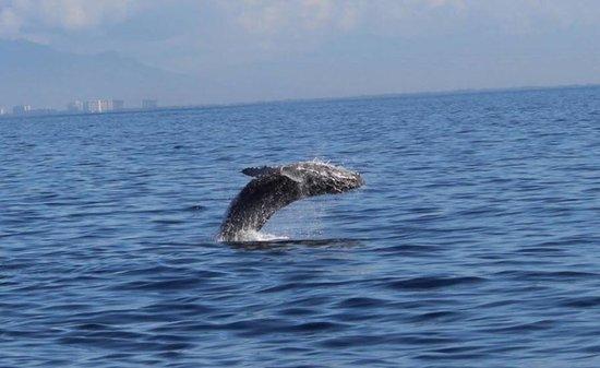 Hotel Riu Vallarta: Whale